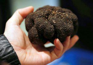 truffe perpignan 66