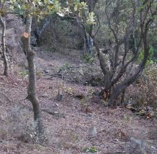 aide plantation truffe 66